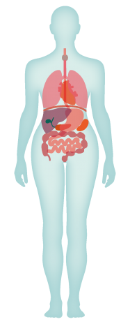 Diagram of the human anatomy and body map
